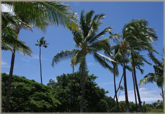 ハワイ旅行記 17_b0093088_714786.jpg