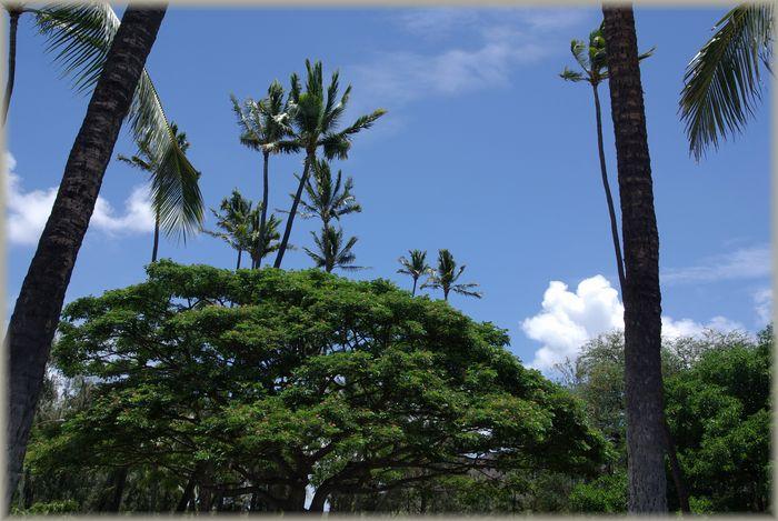ハワイ旅行記 17_b0093088_72650.jpg