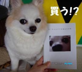 ついに!!「ら~ちゃんママ・・・」書籍化!?_c0160092_21562441.jpg