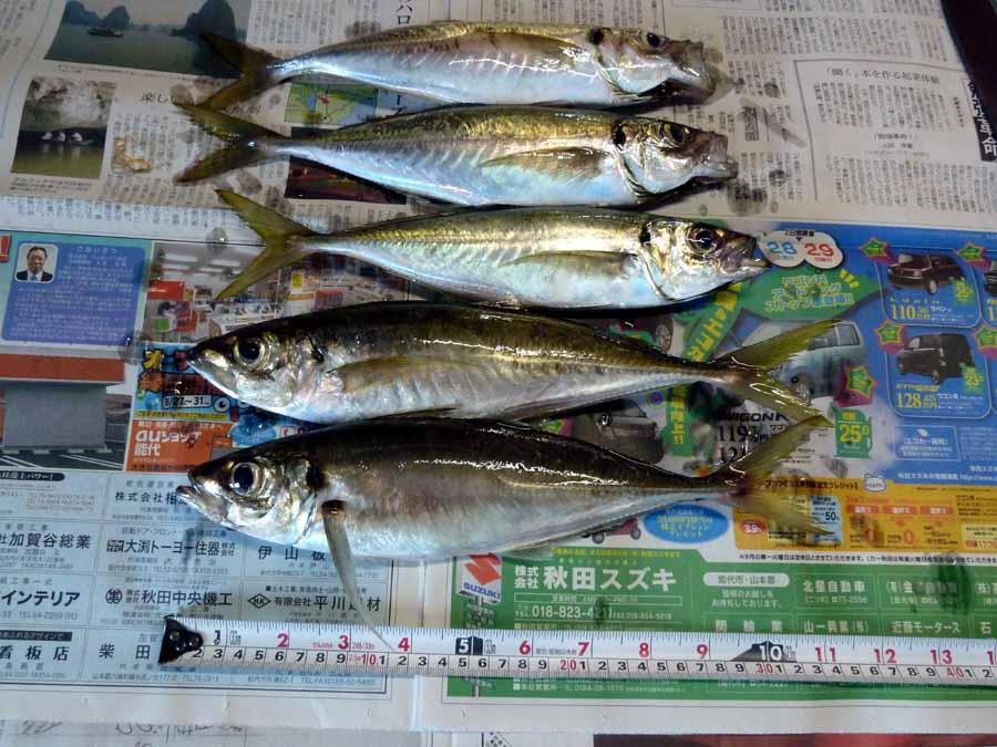 「釣り」_f0150893_1259662.jpg