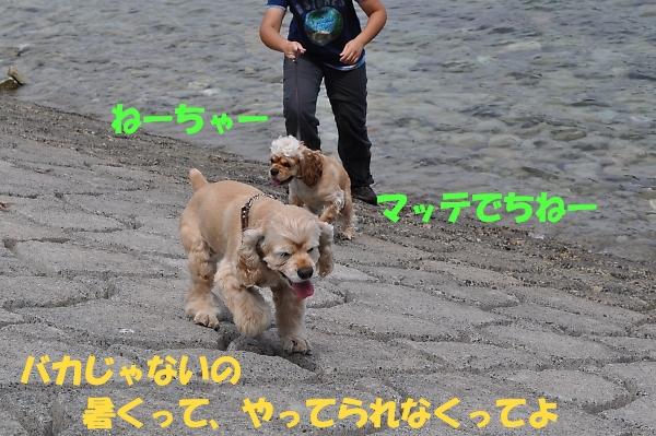 b0067012_12434373.jpg