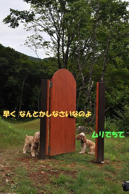 b0067012_14195338.jpg