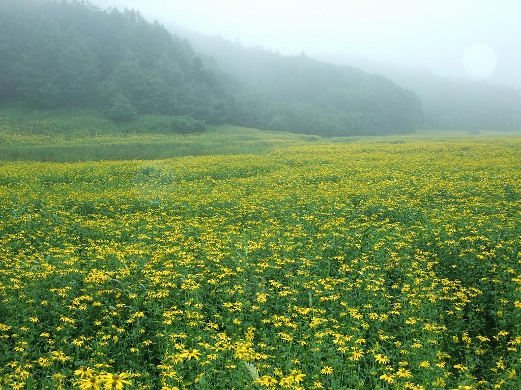 北海道 タンデムツーリング 霧!霧!雨_f0050534_6475970.jpg
