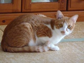 猫のお友だち チニくん編。_a0143140_2128040.jpg