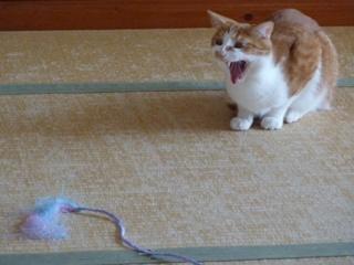 猫のお友だち チニくん編。_a0143140_21311395.jpg
