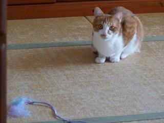 猫のお友だち チニくん編。_a0143140_21313939.jpg