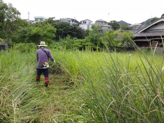 草刈り大好き? in みさき公園団地_c0108460_157139.jpg