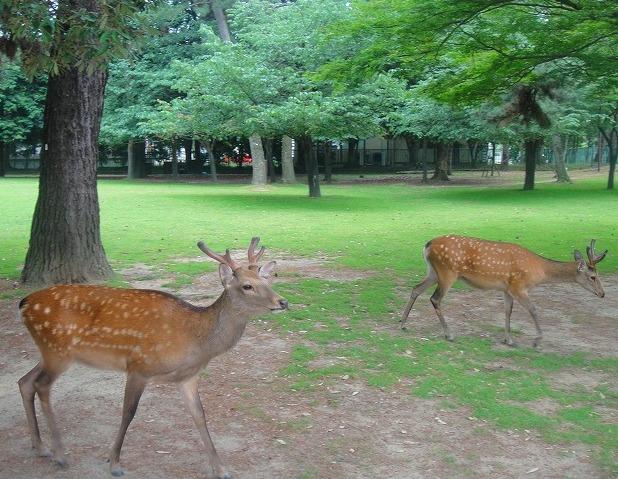 <2010年6月>伊勢路・奈良の旅(その3):「奈良・西ノ京の国宝寺」_c0119160_2114669.jpg