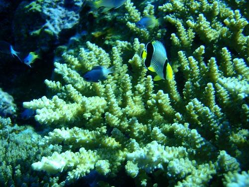 ケラマの海②_c0180460_14391671.jpg