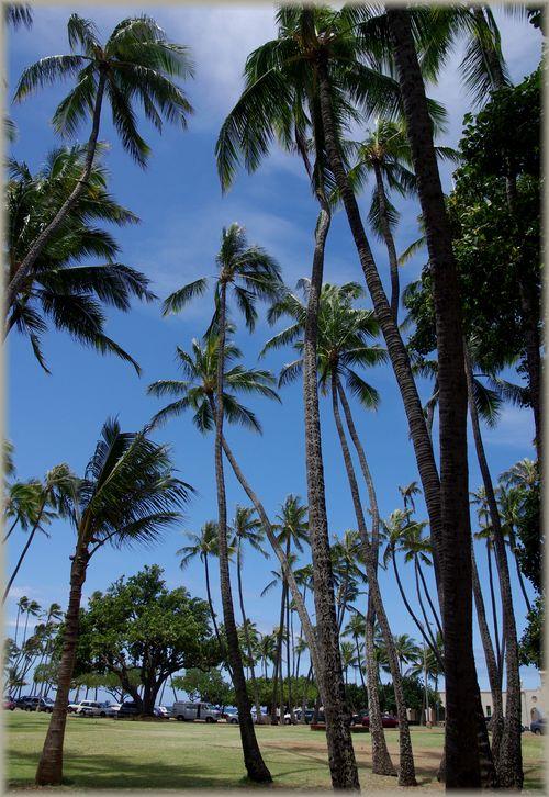 ハワイ旅行記 18_b0093088_721444.jpg