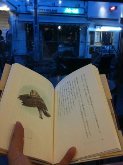 鳥の仏教_b0060102_43187.jpg