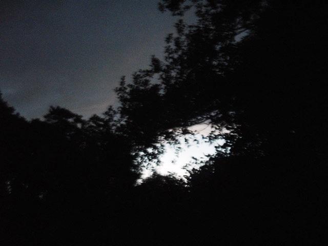 オクラの紫蘇つくね_d0104926_4152946.jpg