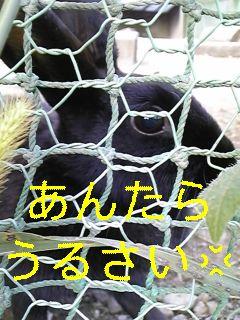 f0148927_19492380.jpg