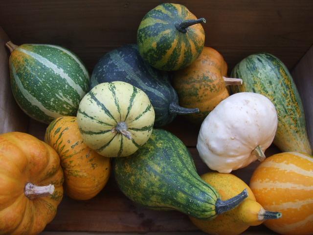 オークリーフ(ベリー&稲穂、そしてアートなかぼちゃたち)_f0049672_13394735.jpg