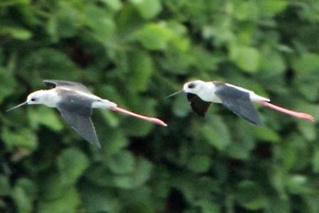 ★先週末の鳥類園(2010.8.28~29)_e0046474_13194352.jpg