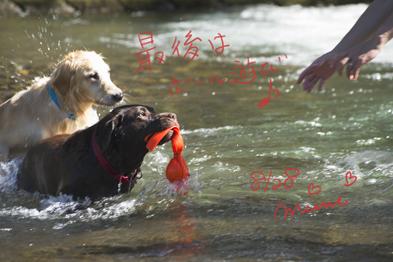 mimiの夏休み♪in NAGANO no KAWA_a0066192_20451661.jpg