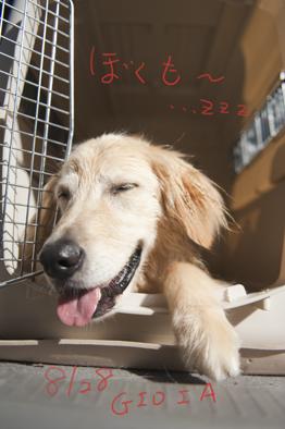 mimiの夏休み♪in NAGANO no KAWA_a0066192_20522746.jpg