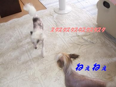 f0179203_17413612.jpg