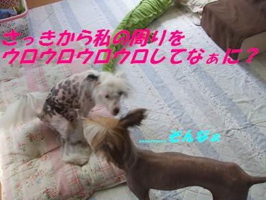 f0179203_1743941.jpg