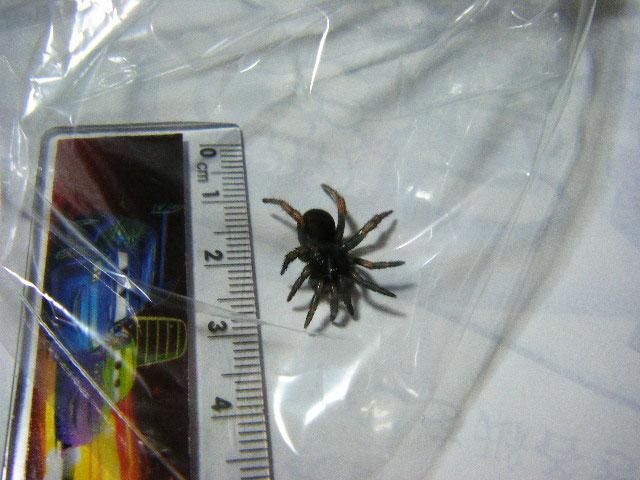 足が10本の蜘蛛を見つけました_b0025008_22353773.jpg