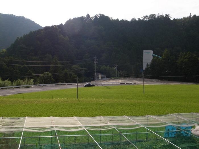 今日の田んぼの風景_c0116915_23595241.jpg