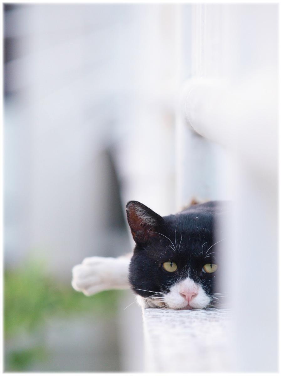 猫にゃん_f0021869_2103367.jpg