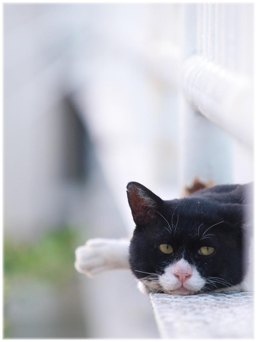 猫にゃん_f0021869_2104758.jpg