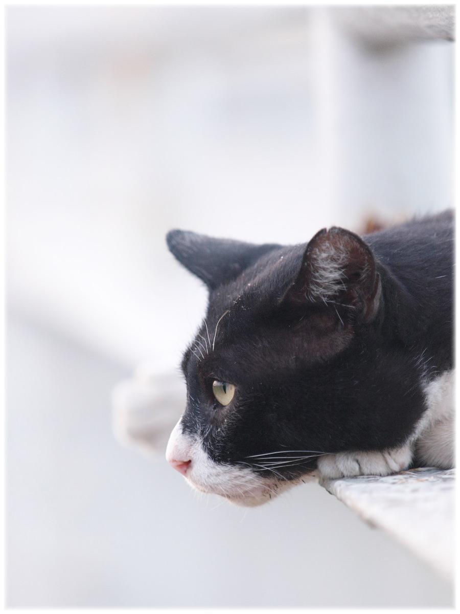 猫にゃん_f0021869_211071.jpg