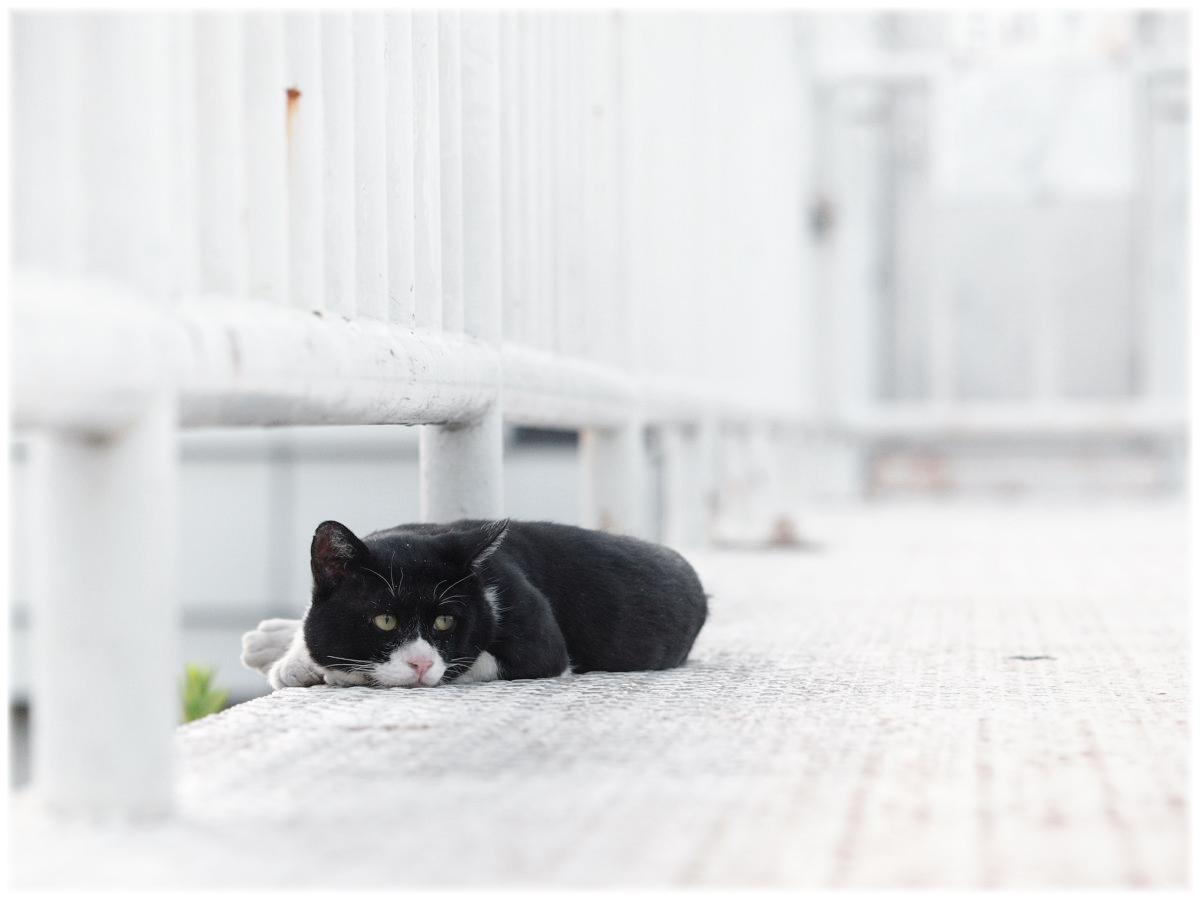 猫にゃん_f0021869_2111135.jpg