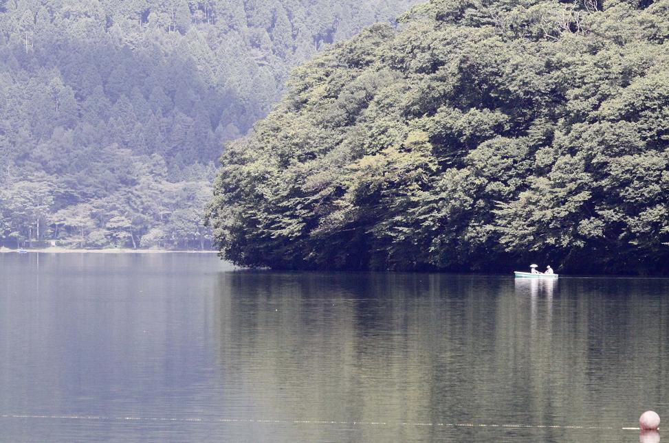 自然の寄せ植え         榛名湖畔_a0107574_6215299.jpg