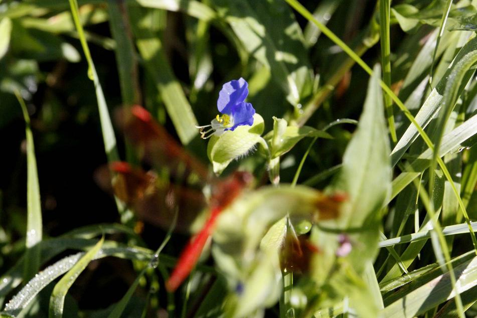 自然の寄せ植え         榛名湖畔_a0107574_6221781.jpg