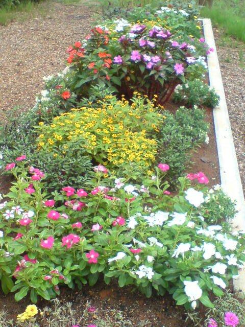 自慢の花壇です。_d0182179_11155713.jpg