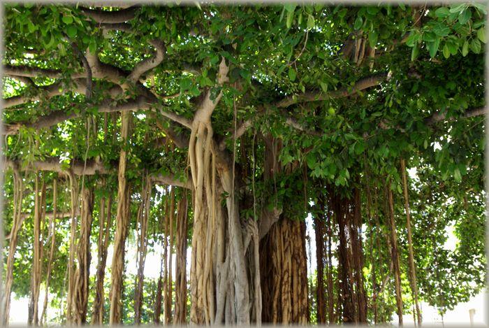 ハワイ旅行記 20_b0093088_6564848.jpg