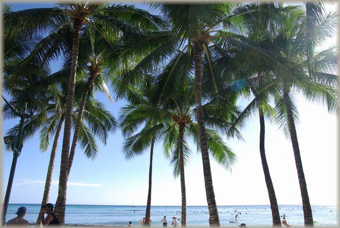 ハワイ旅行記 20_b0093088_6572655.jpg