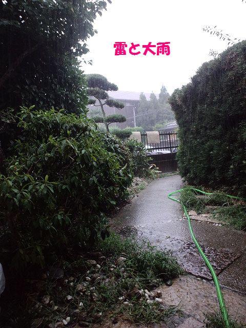 b0127531_1740025.jpg