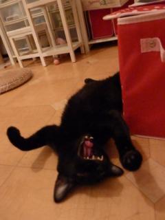 くまさんに出会ったら猫 ろった編。_a0143140_1154532.jpg