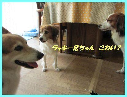 b0198549_1945660.jpg