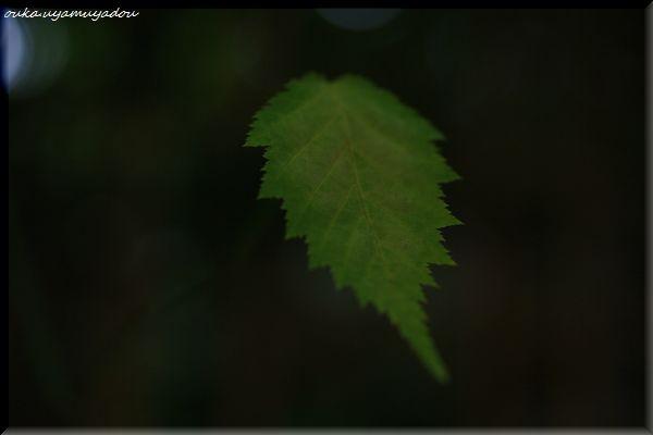 残暑厳しき嵐山_a0157263_16203964.jpg