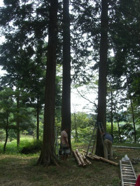 森のツリーハウス_c0148232_14454381.jpg