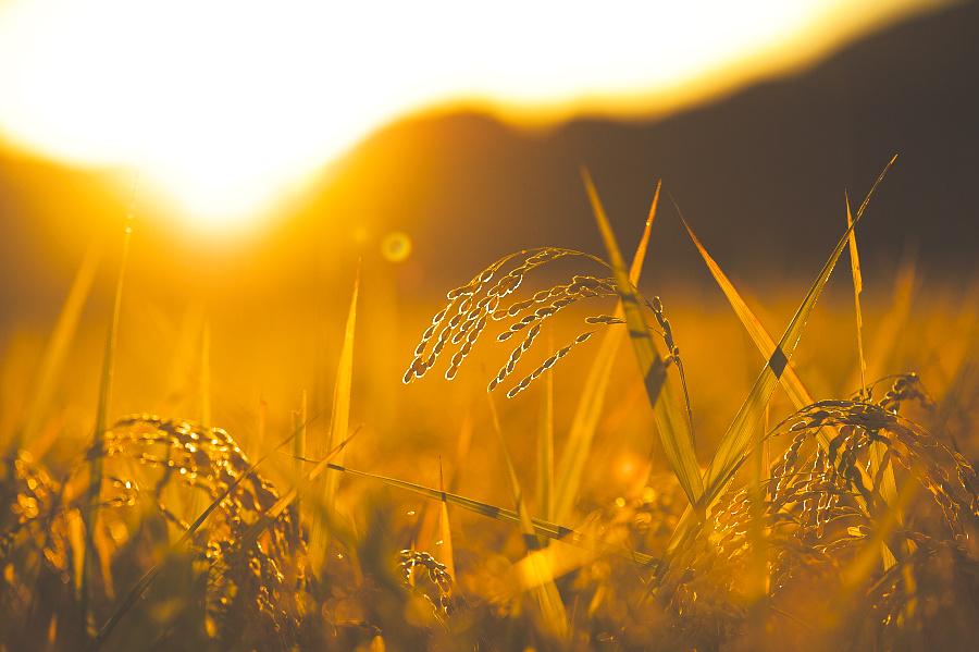 2010 年 09 月 06 日 夕焼け に ... : 2010年11月 カレンダー : カレンダー