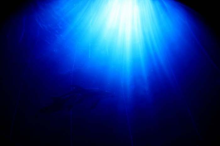 My relaxation time in a deep blue _a0122544_711698.jpg