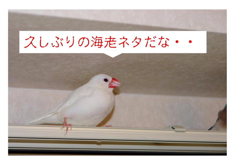 a0019545_17482582.jpg