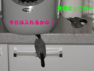 b0158061_19283651.jpg