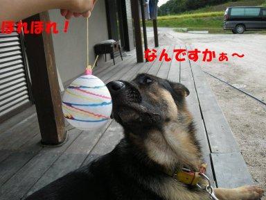 b0113663_8583867.jpg