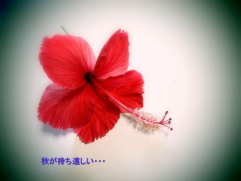 f0175003_1434573.jpg