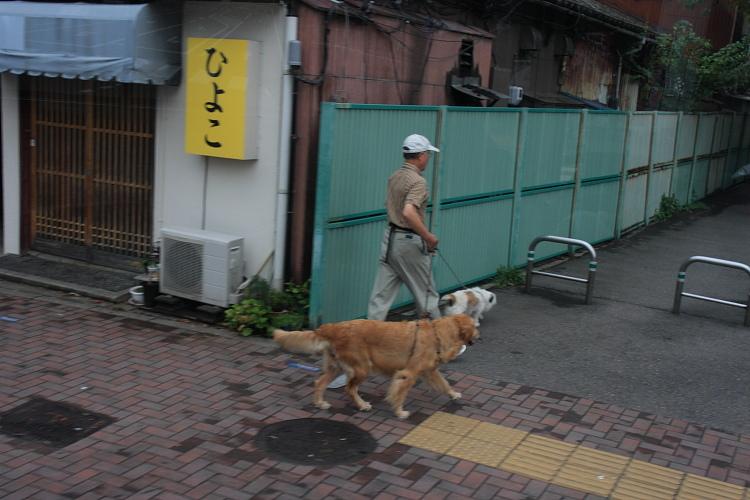 新潟  おまけ・・・電車が出るまで市内瞥見_b0061717_23585737.jpg