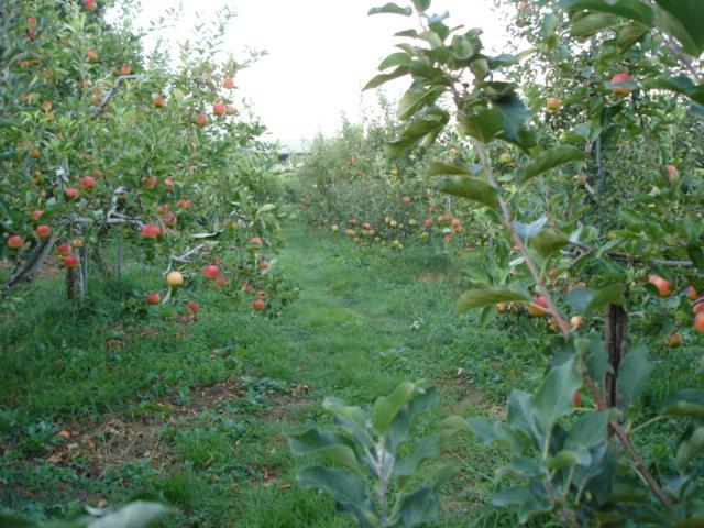 収穫の日_e0019167_19303740.jpg