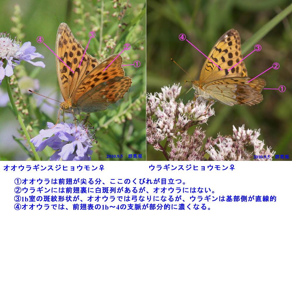a0146869_21245245.jpg