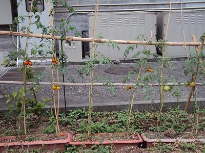 菜園・浩二_c0140982_17222666.jpg