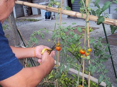 菜園・浩二_c0140982_17223694.jpg